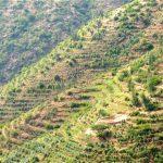 Äthiopien Harrar natural