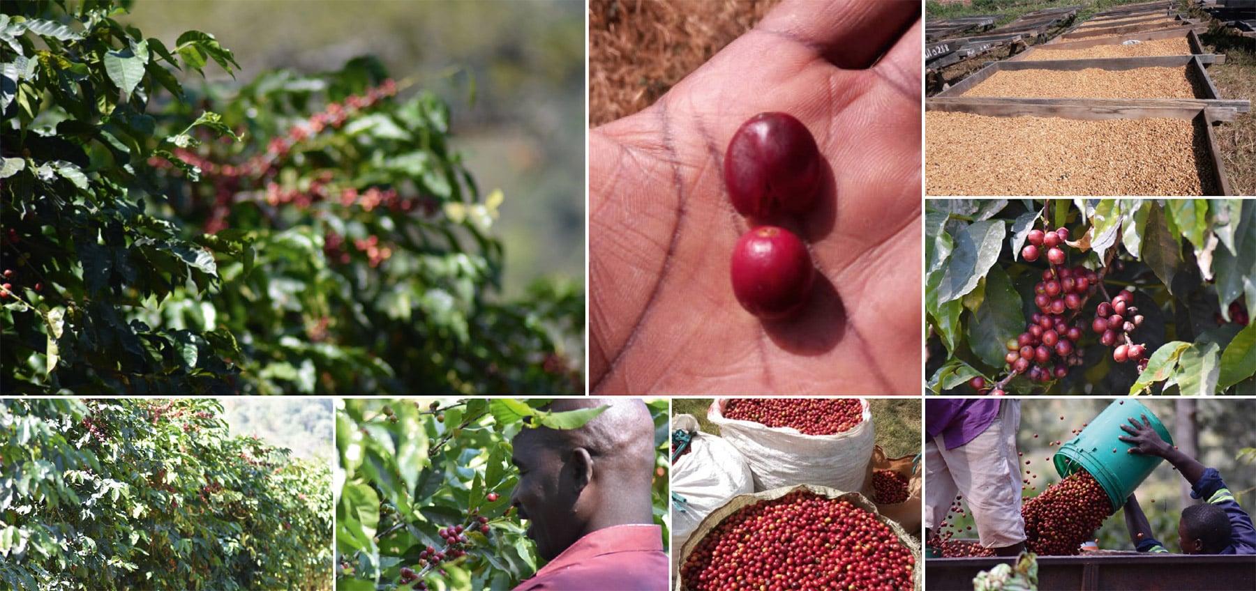 research-plot-kaffeeplantage